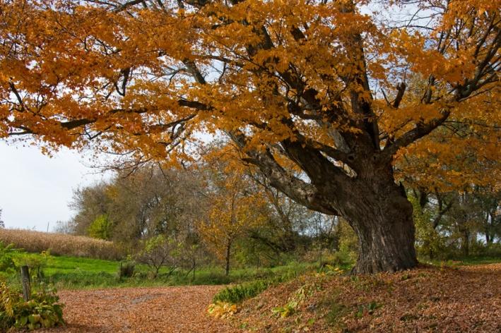 10-TreePamFarm1-100