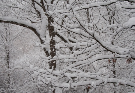 12-SnowForest-100