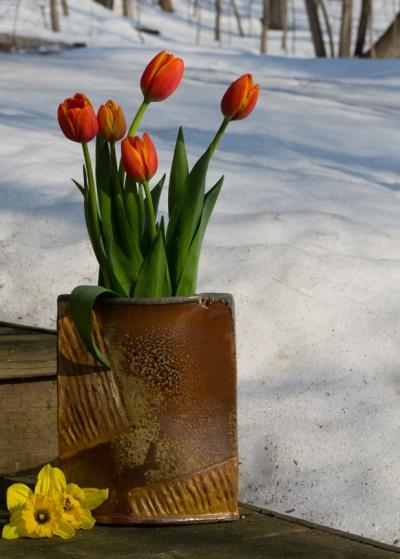 3-TulipSnow-100