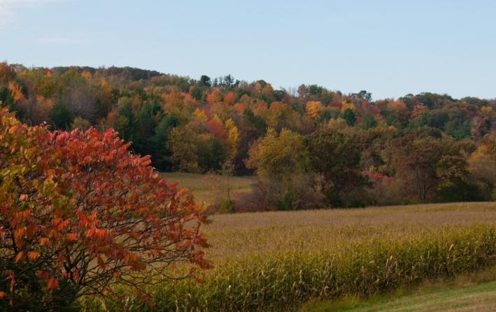 Autumn Color - Wisconsin Farm Fields