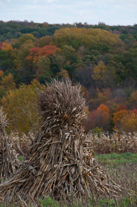 Autumn Color - Wisconsin Corn Harvest