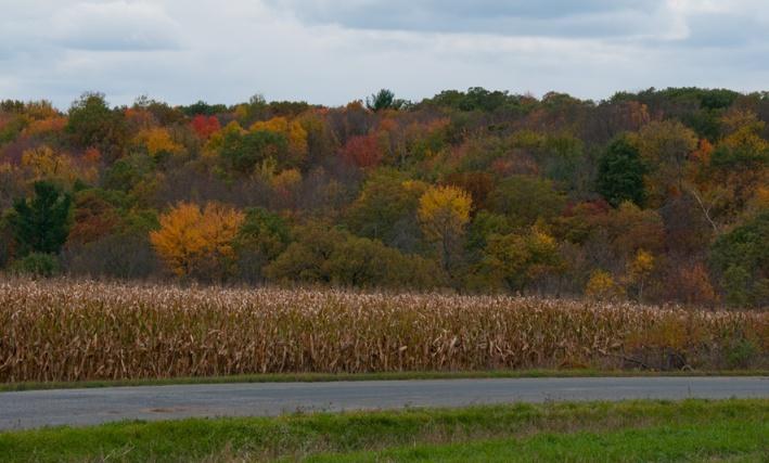 Autumn Color - Wisconsin Corn Field