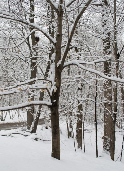 3-Snow-100
